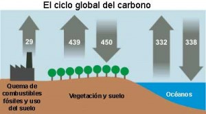 el ciclo del carbono